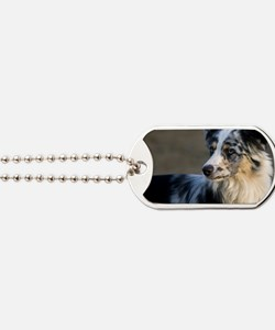 (2) aussie looking left Dog Tags