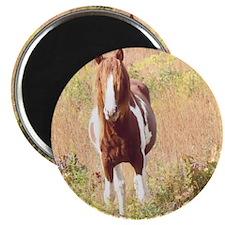 Pretty Paint Pony Magnet