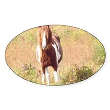 Pretty Paint Pony Decal