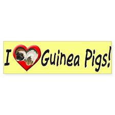 I Love Guinea Pigs Bumper Bumper Sticker