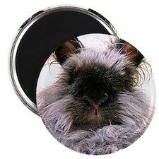 rabbit calendar Magnet