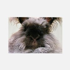 rabbit calendar Rectangle Magnet