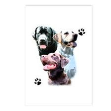 Lab Trio Postcards (Package of 8)