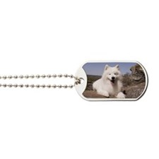 DJ Dog Tags