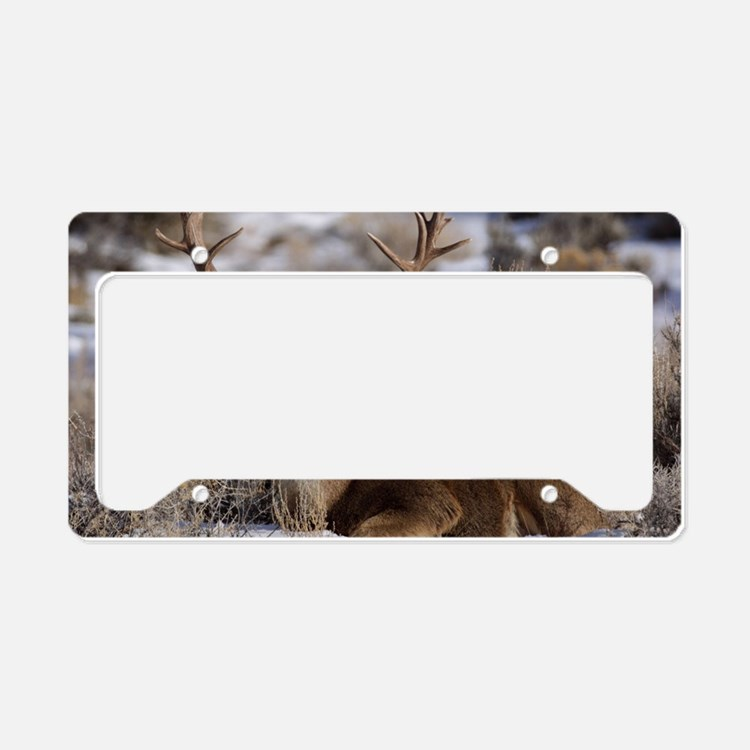 Deer Hunting Licence Plate Frames Deer Hunting License