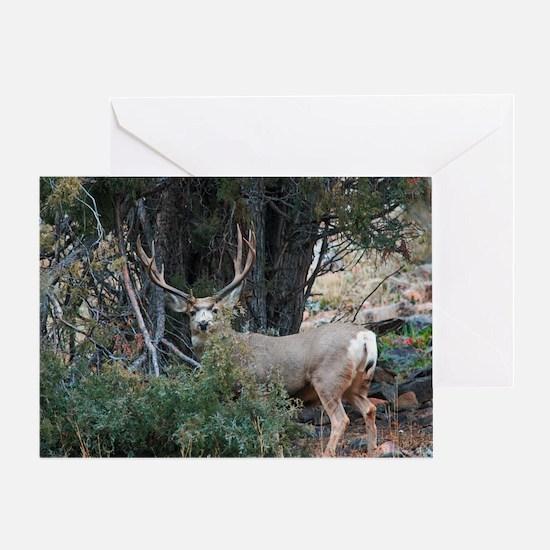 Mule deer spur buck Greeting Card
