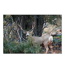 Mule deer spur buck Postcards (Package of 8)