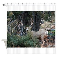 Mule deer spur buck Shower Curtain