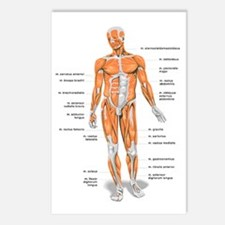 Muscles anatomy body Postcards (Package of 8)