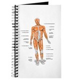 Physical therapy Journals & Spiral Notebooks