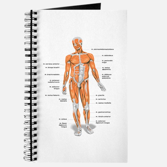 Muscles anatomy body Journal