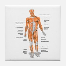 Muscles anatomy body Tile Coaster