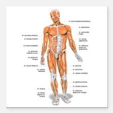 """Muscles anatomy body Square Car Magnet 3"""" x 3"""""""