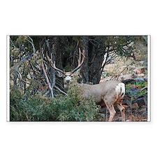 Mule deer spur buck Decal