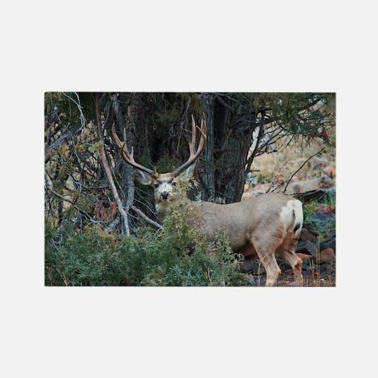 Mule deer spur buck Rectangle Magnet