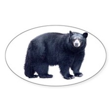 Black Bear Oval Decal