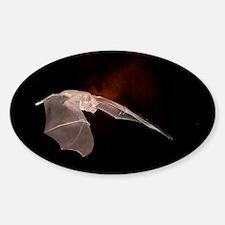 BAT10X14 Sticker (Oval)