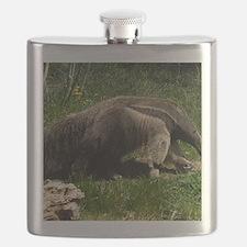 (4) Giant Anteater Flask