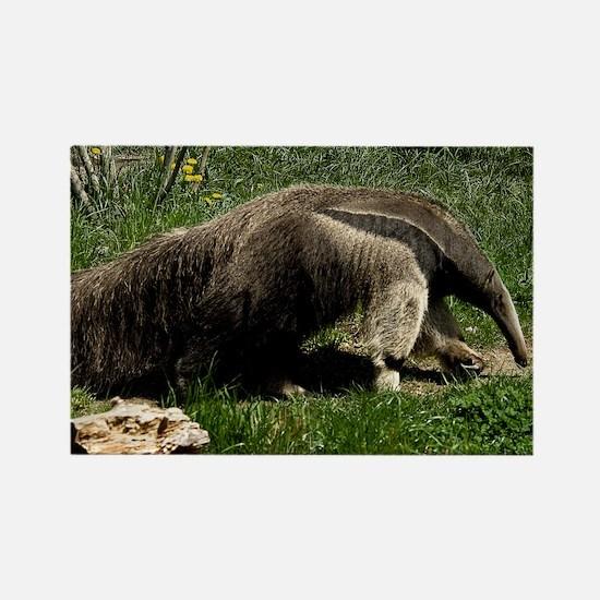 (2) Giant Anteater Rectangle Magnet