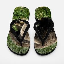 (15) Giant Anteater Flip Flops