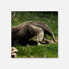 """(15) Giant Anteater Square Sticker 3"""" x 3"""""""