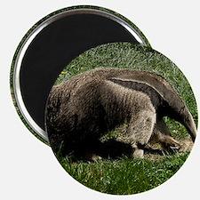 (15) Giant Anteater Magnet