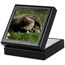(15) Giant Anteater Keepsake Box