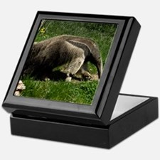 (15) Giant Anteater Keepsake Box