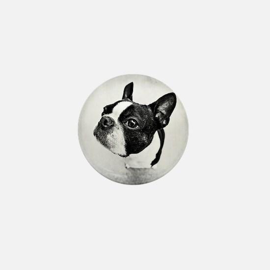Boston Terrier Mini Button