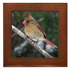 Female Cardinal Framed Tile