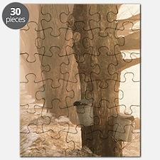 SAP BUCKETS Puzzle