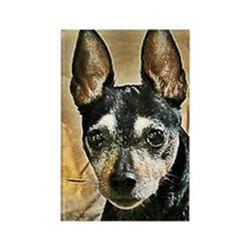 Senior Rat Terrier Rectangle Magnet