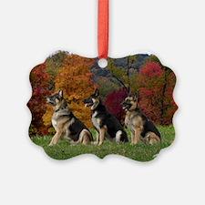 CRW_6649-abeee Ornament