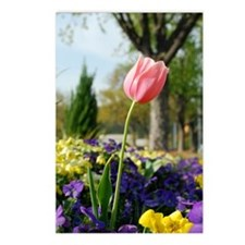 pink tulip Postcards (Package of 8)
