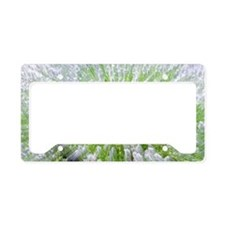 lavender burst License Plate Holder