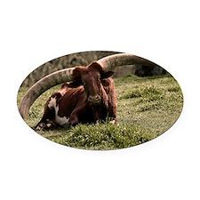 (3) Watusi Cow Oval Car Magnet