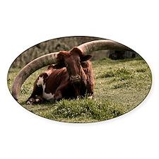 (3) Watusi Cow Decal