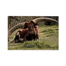 (3) Watusi Cow Rectangle Magnet