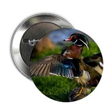 "(4) Wood Duck Wing 2.25"" Button"