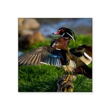 """(4) Wood Duck Wing Square Sticker 3"""" x 3"""""""