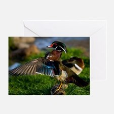 (4) Wood Duck Wing Greeting Card