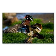 (6) Wood Duck Wing Decal