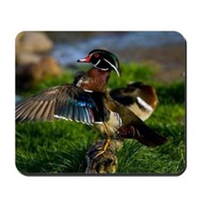 (6) Wood Duck Wing Mousepad