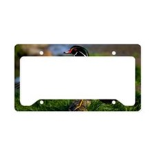 (6) Wood Duck Wing License Plate Holder