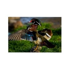 (6) Wood Duck Wing Rectangle Magnet