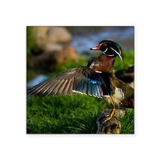 "(15) Wood Duck Wing Square Sticker 3"" x 3"""