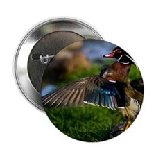 "(15) Wood Duck Wing 2.25"" Button"