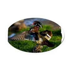 (16) Wood Duck Wing Oval Car Magnet