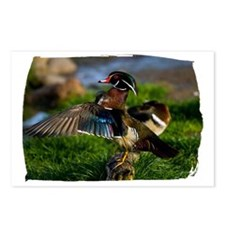 (16) Wood Duck Wing Postcards (Package of 8)