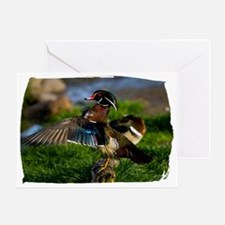 (16) Wood Duck Wing Greeting Card